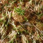 Tartare champignons