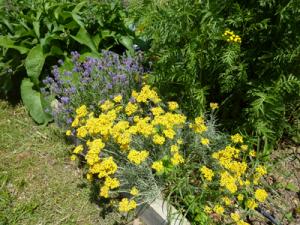 couleurs_jardin_gites_ecologiques_de_baugnac